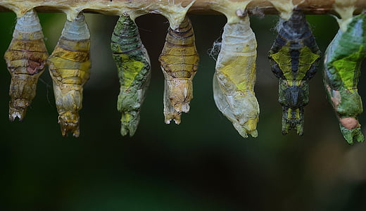assorted-color cocoon in branch