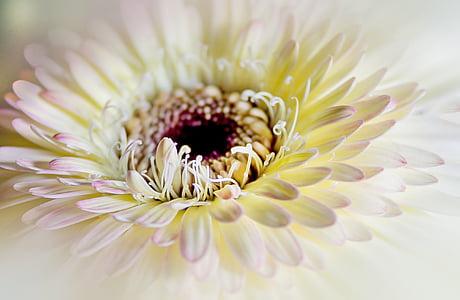 macro photo of white daisy