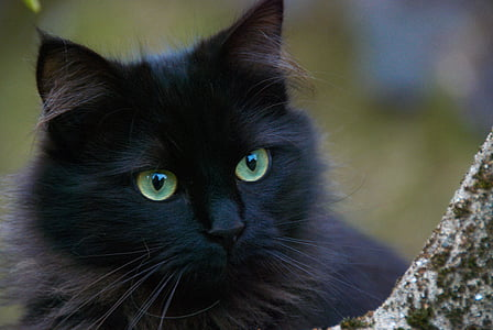 black cat in close up photography