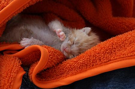 orange tabby kitten on orange bath towel