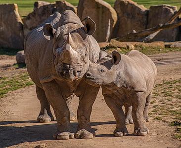 two gray rhinos during daytime