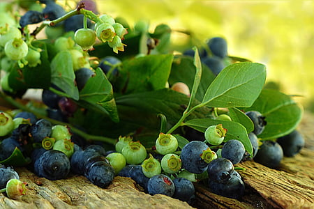 blueberries close up photography