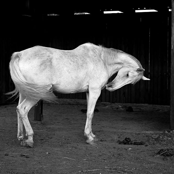 grayscale photography of horse near wall