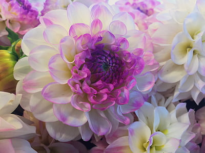 closeup photo of white and purple petaled flower