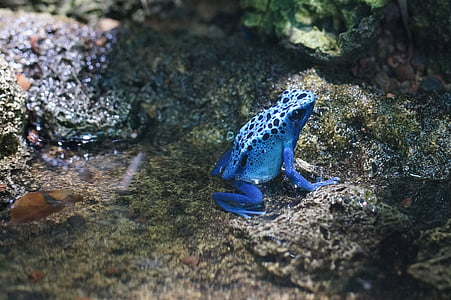 close up photography of blue frog