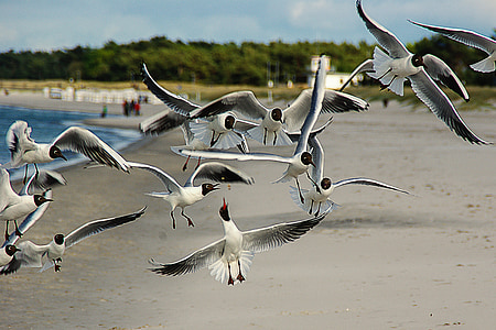 birds flying on coast