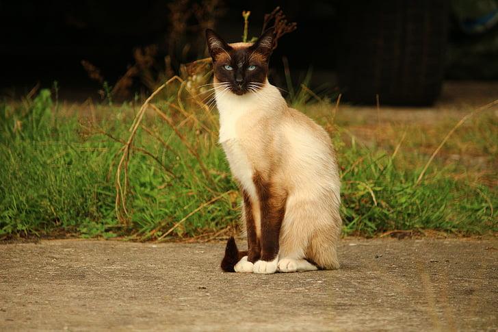 Siamese cat sitting on sand