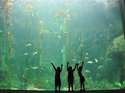 three silhouette person staring at the aquarium