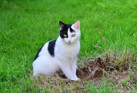short-furred white and black cat sitting on grass field during daytime