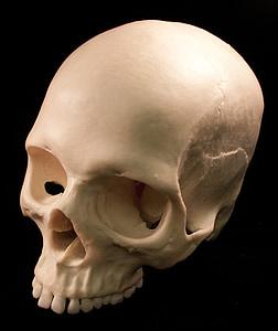 white human head skull