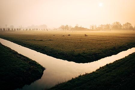 river beside green farm