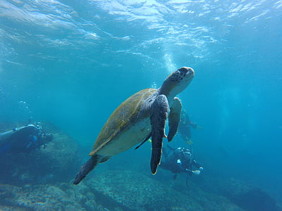 brown and grey ocean turtle