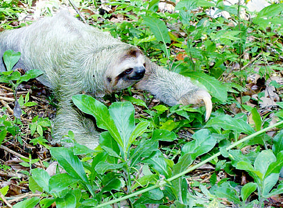 sloth on green leafy plants during daytime