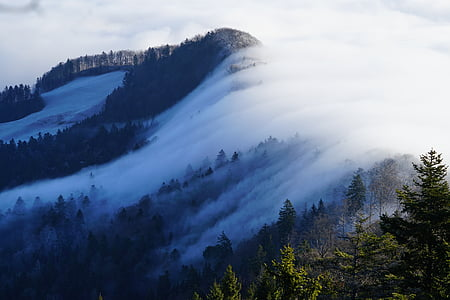 cloud covered mountain forest