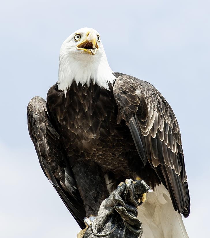 black and white American Eagle