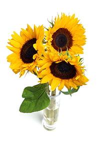 three yellow sun flowers