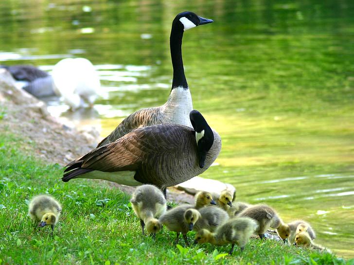 flock of ducks standing on green grass