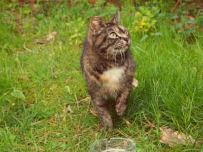 tortoiseshell cat walking on grass field