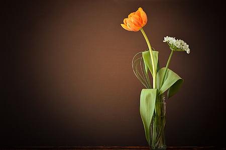orange tulip flower in clear glass vase