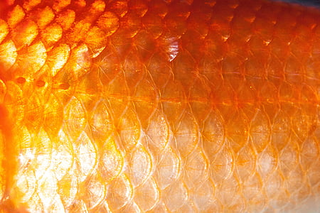orange fish scales