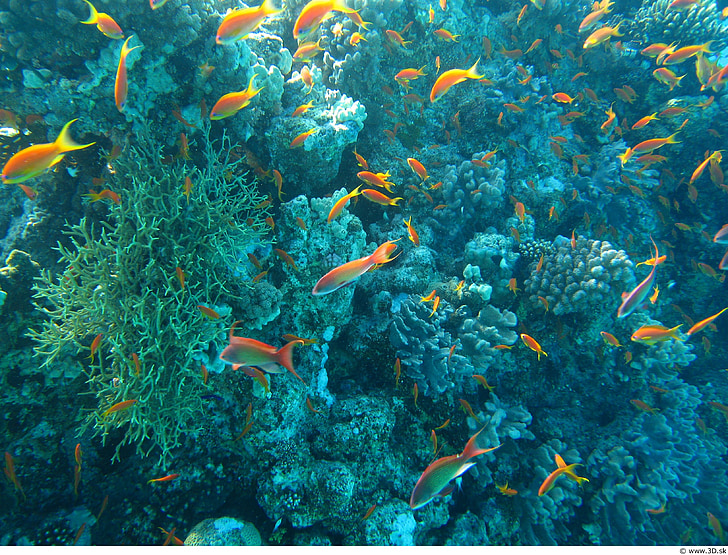 underwater photography of shoal of yellow fish