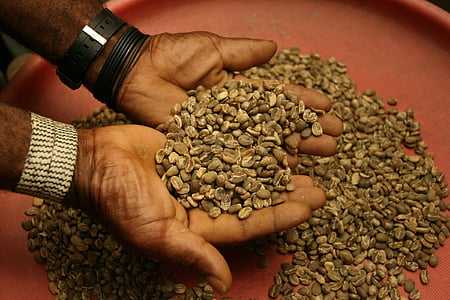 coffee beans, raw, brown, agriculture, farmer, merchant