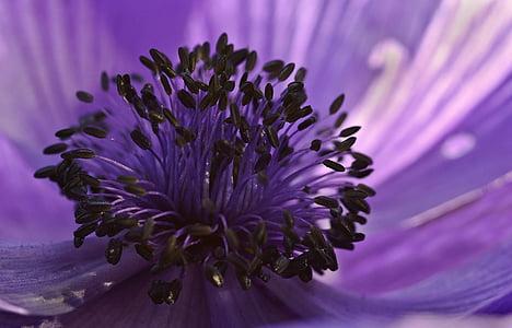 photo of purple flower buds