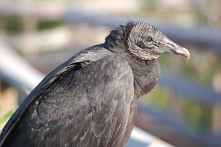selective focus photography of gray long-beaked bird