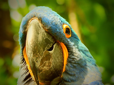 close-up photography of blue and gray parrot
