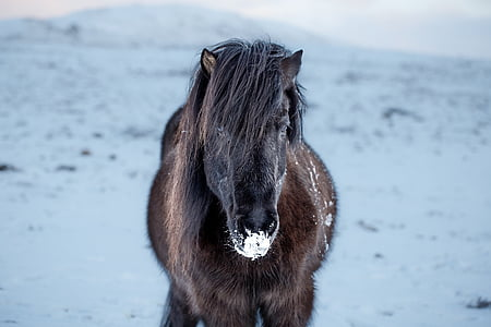 brown and black horse
