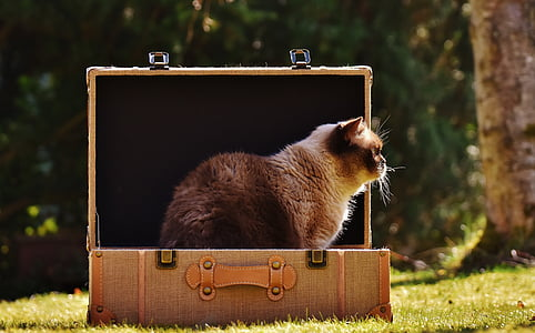 brown cat inside suitcase on the grass