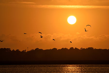 flying birds silhouette during golden hour