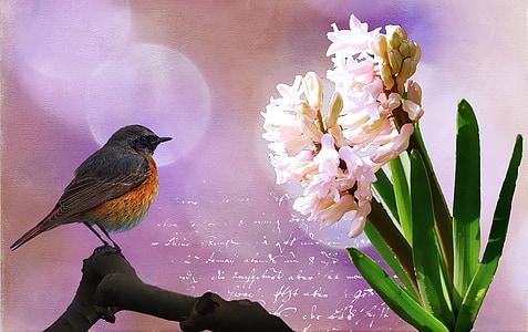 black and orange bird near white flower