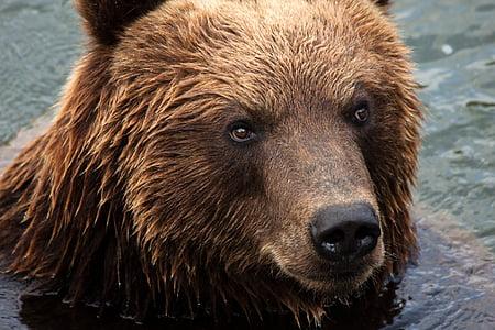 photo of brown bear