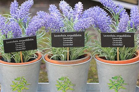 three purple lavender flowers in grey pots