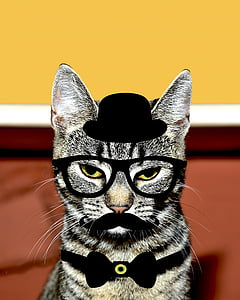 gray tabby cat with edited black hat and bow