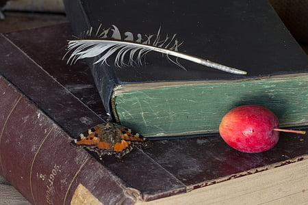 tortoiseshell butterfly beside black covered book next on round red fruit