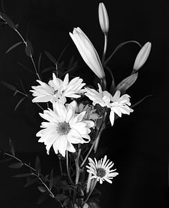 grayscale photo of daisy flower