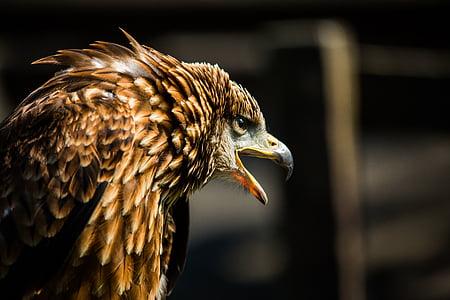 brown bird open it's beak