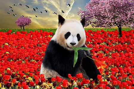 panda bear surrounded by rose flowers