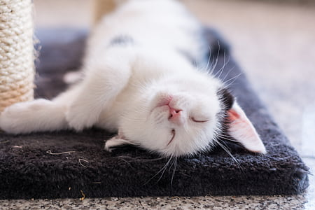 white and black cat laying on black area mat