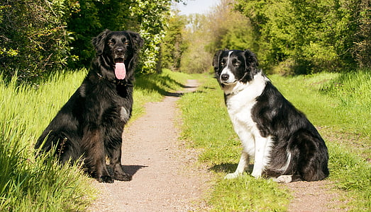 two black and white dogs sitting on ground with grass near tall trees at daytim