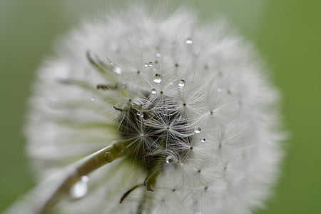 low angle photography oif white dandelion flower