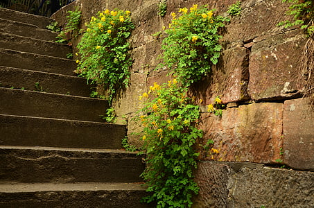 green leaf plant on staircase