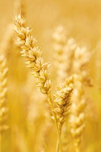 brown grains closeup photography