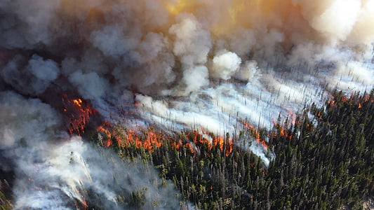 time lapse photo of forest fire