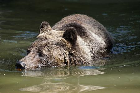 black bear on body of water