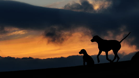silhouette of 2 dogs under black cloud