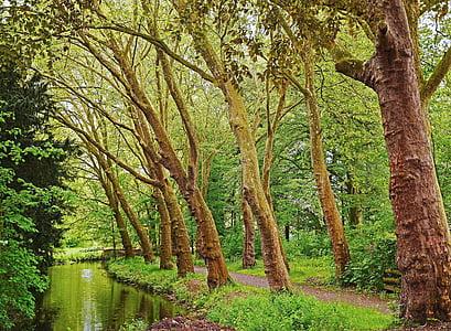 gray trees beside river