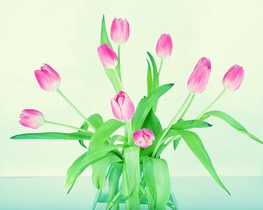 pink tulips flower arrangement